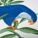 Blue Lorikeet, Fanny Shorter - CultureLabel - 2