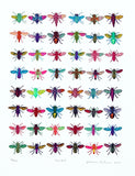 Flies, John Dilnot - CultureLabel - 1