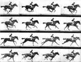 Galloping Horse, Eadweard Muybridge