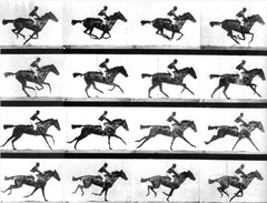 Galloping Horse, Eadweard Muybridge Alternate View
