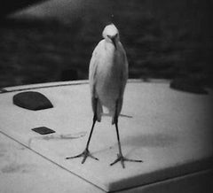 Heron (Venice), Giacomo Brunelli Alternate View