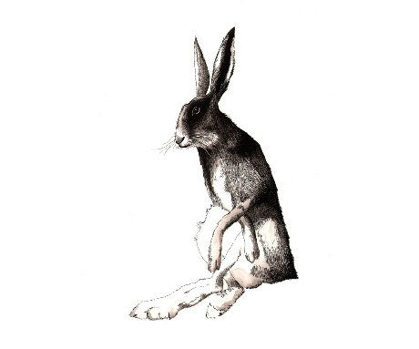 Wise Old Hare, Jimbobart - CultureLabel - 1 (full image)
