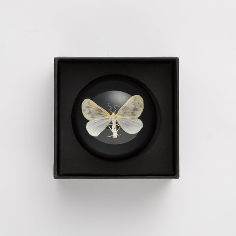 Memento Mori Paperweight: Moth, The School of Life - CultureLabel - 1