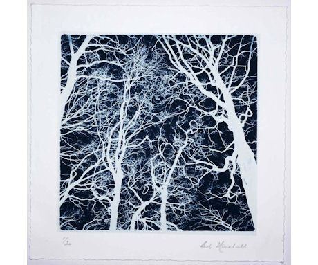 Tree Study in Negative #4, Bob Marshall