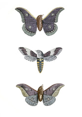 Metamorphic Moth-Birds, Penelope Kenny