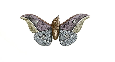 Metamorphic Moth-Birds, Penelope Kenny Alternate View