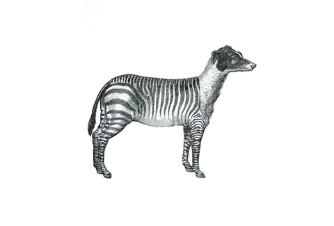 Zebradog, Penelope Kenny Alternate View