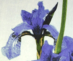 Irises Woodblock, Claire Cameron-Smith Alternate View