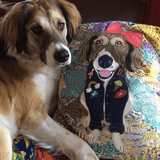 Bespoke Pet Cushion, Mia Loves Jay - CultureLabel