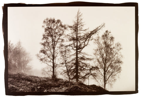 Misty Trees, Bob Marshall - CultureLabel