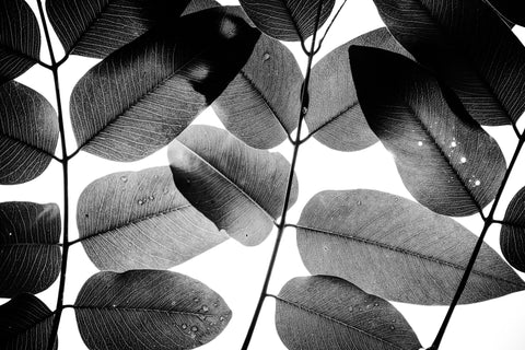 Experiments With Leaves, Tal Paz-Fridman - CultureLabel