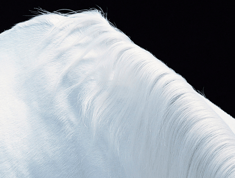 Horse Mountain, Tim Flach Alternate View
