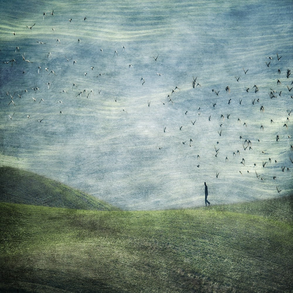 Walking With Birds, Linda Bembridge - CultureLabel - 1