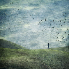 Walking With Birds, Linda Bembridge