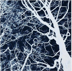 Tree Study in Negative #4, Bob Marshall Alternate View