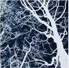 Tree Study in Negative #4, Bob Marshall - CultureLabel - 2