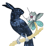 The Resplendent Rabbit-bird of Paradise, Penelope Kenny - CultureLabel - 2