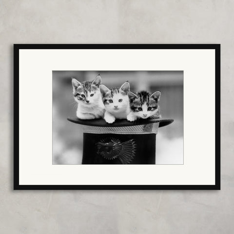 Three Kittens in A Hat, Bridgeman Images