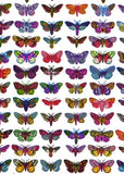 Moths, John Dilnot - CultureLabel - 2