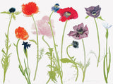 Oriental Poppies, Elizabeth Blackadder - CultureLabel - 1