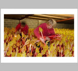The Rhubarb Triangle, Martin Parr - CultureLabel - 2