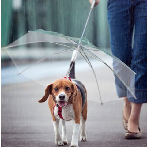Dog Lead Pet Transparent Umbrella