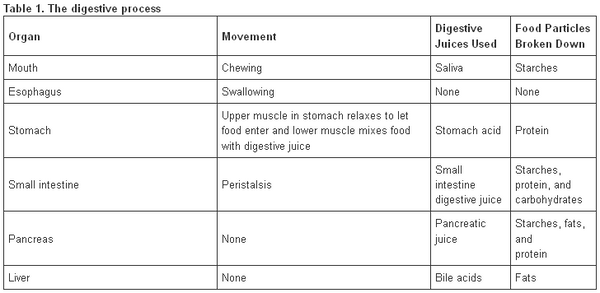 Digestive Enzymes Chart: How Organs Break Down Food