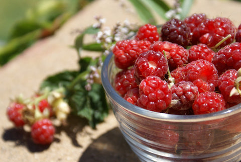 Red Raspberries - Super Food for Super Healthy Immune System!