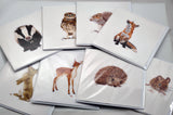 Hedgehog Prints and Cards