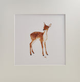 Fallow Deer Prints and Cards