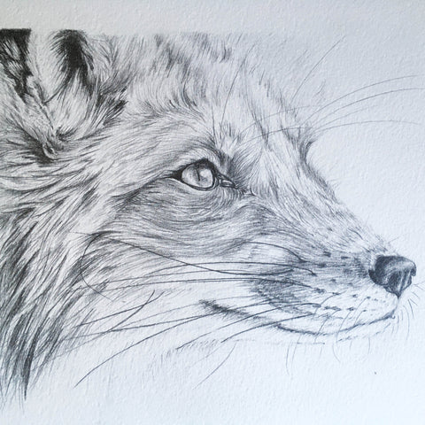 Fox Pencil Sketch