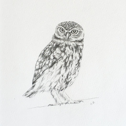 Little Owl Pencil Sketch