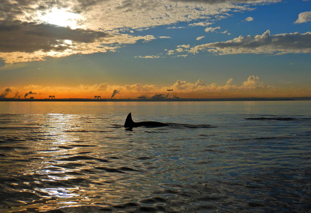Botany Bay Sunrise Paddle