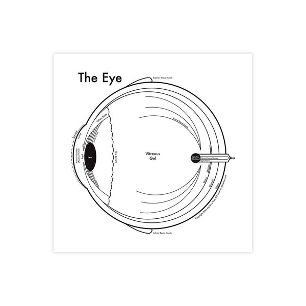 The Eye Anatomy Print