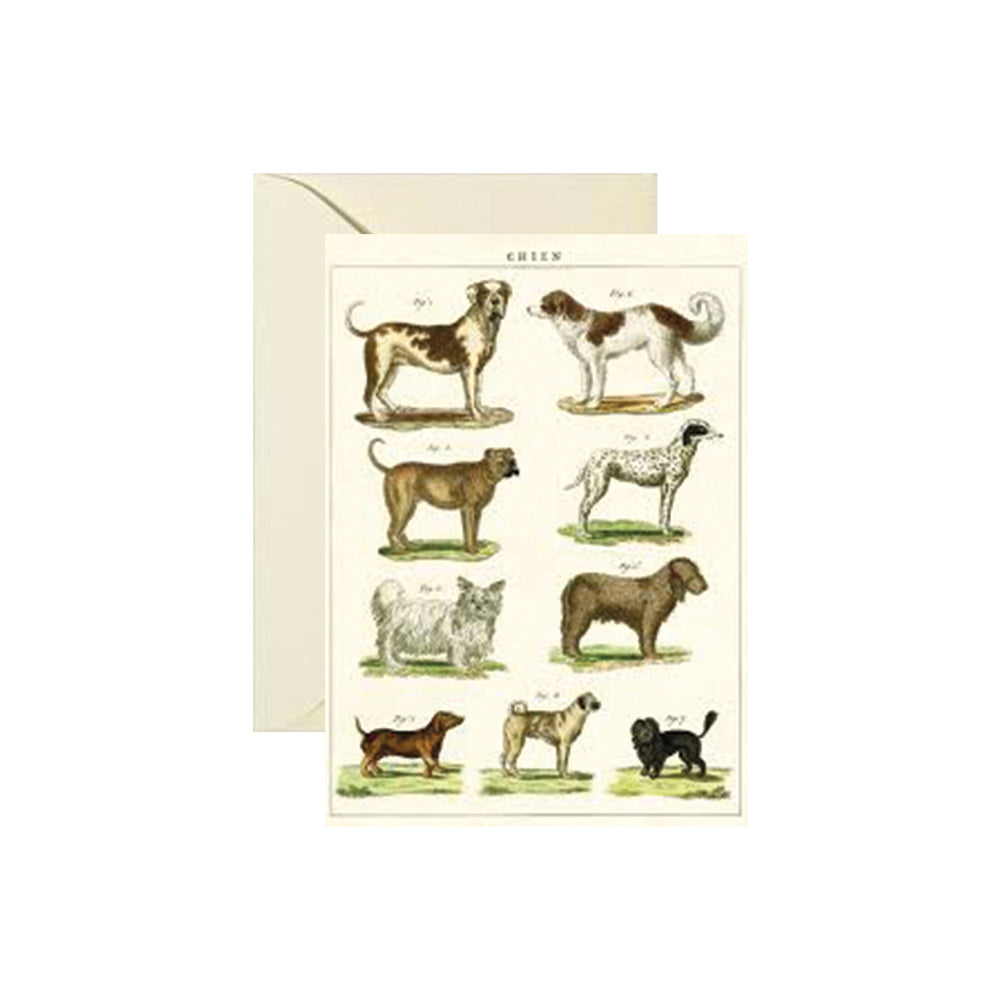 Dog Chart Card Foursided - Foursided