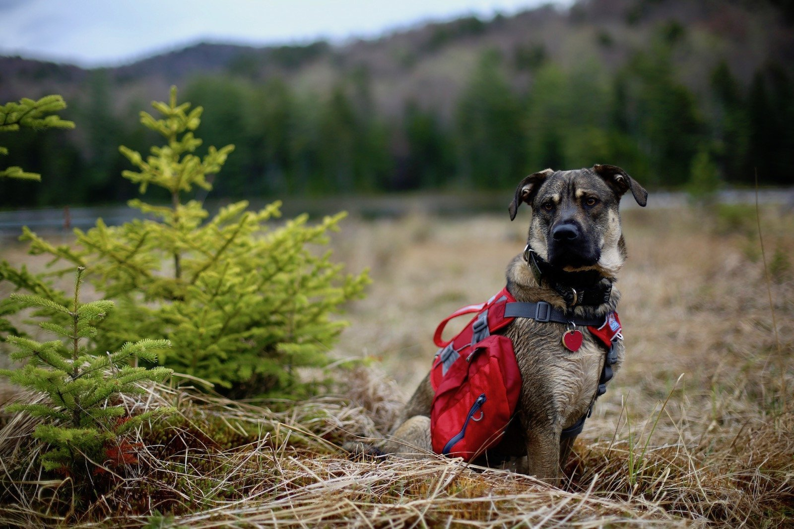 7 Helpful Tips for Hiking With Dogs | Pure Adirondacks