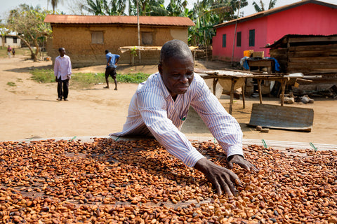 west-africa-cocoa-drying