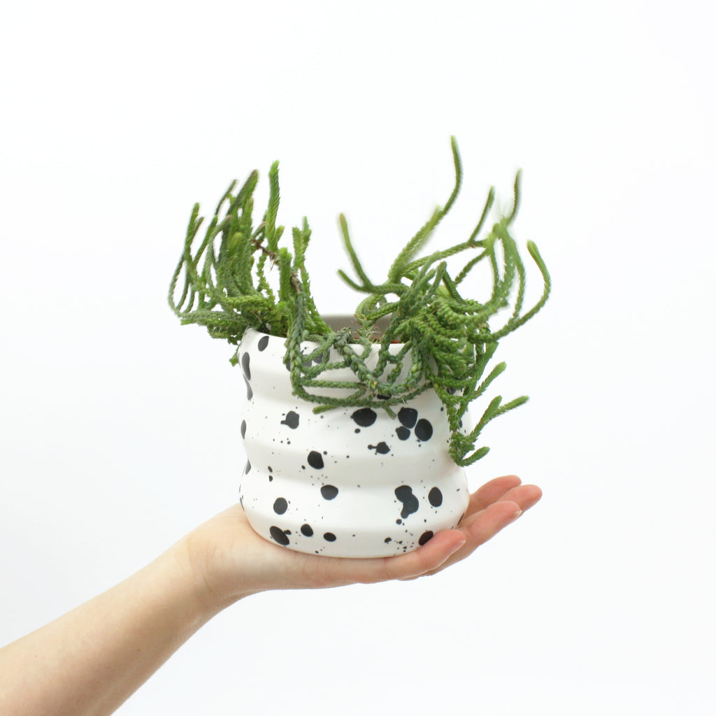 Small Planters / Splash