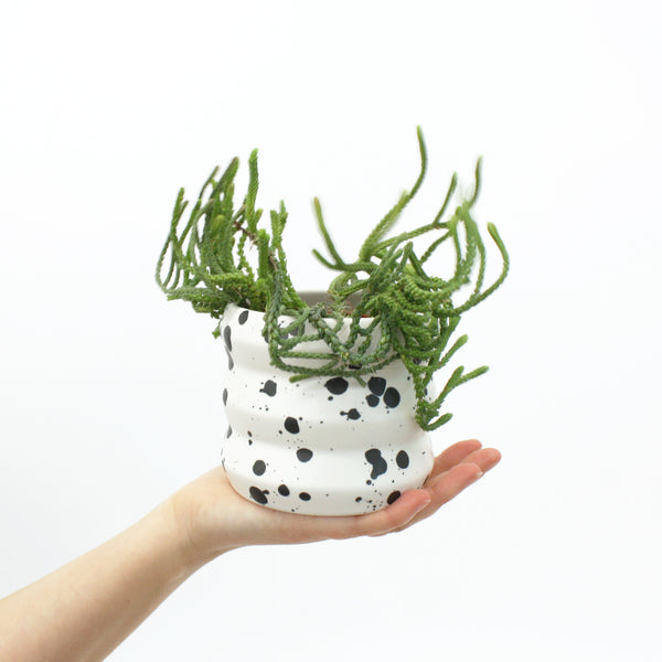 Small Planters / Splash - Corbé