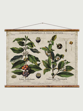 Coffee and Tea Botanical Chart