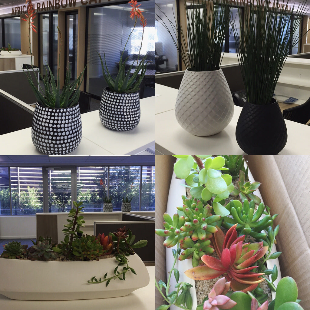 Benefits of Plants in the Workplace