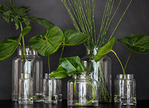 The Leaf Collection features snake grass, delicious monster, anthurium leaves and tropical leaves.