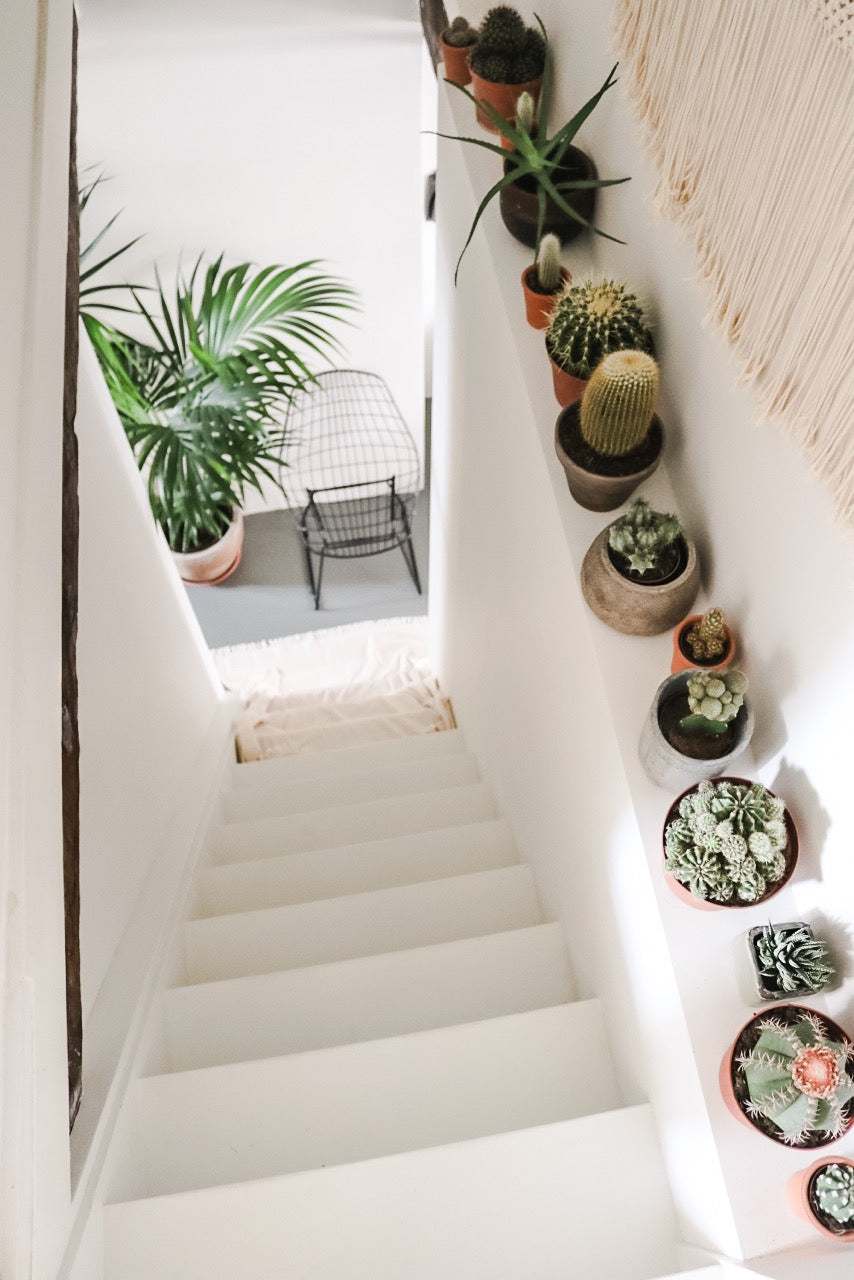 A row of cacti to decorate the stairs