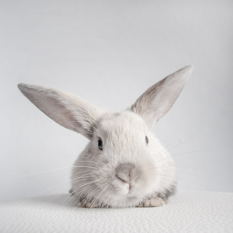 ARK Skincare rabbit representing the brand ethos