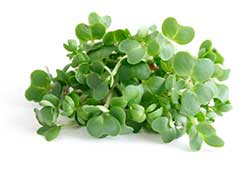Watercress is typically used to treat skin blemishes, spots and cuts, and used as an ingredient in ARK's Skin Clear Cleanser.