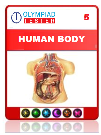 OLYMPIADTESTER CERTIFIED STUDENT EXAM (OCS) - CLASS 5 SCIENCE - HUMAN BODY AND FOOD - Olympiad