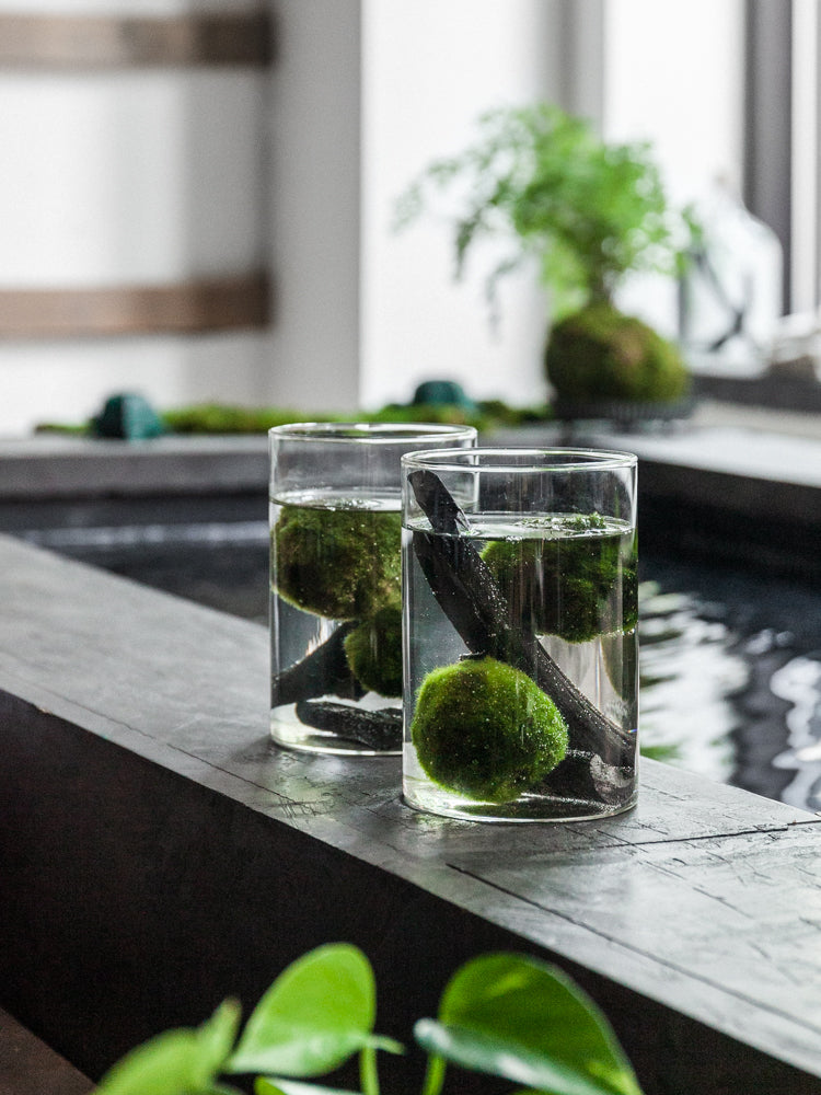 Marimo Table Top with Lid