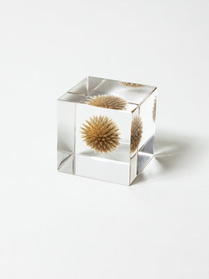 Sola Cube - Small Globe Thistle