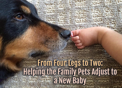 From Four Legs to Two: Helping the Family Pets Adjust to a New Baby