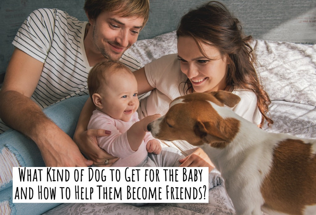 What Kind of Dog to Get for the Baby and How to Help Them Become Friends?
